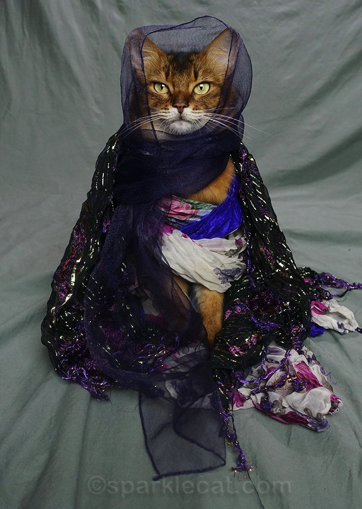 Somali cat wearing all the scarves at once
