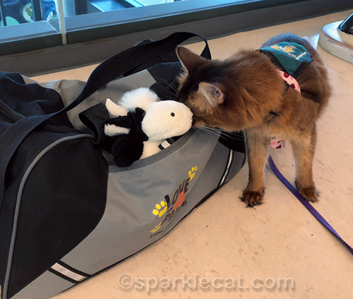 therapy cat checking pouch with stuffed cow