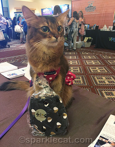 somali cat posing with gift from Lola the Rescued Cat