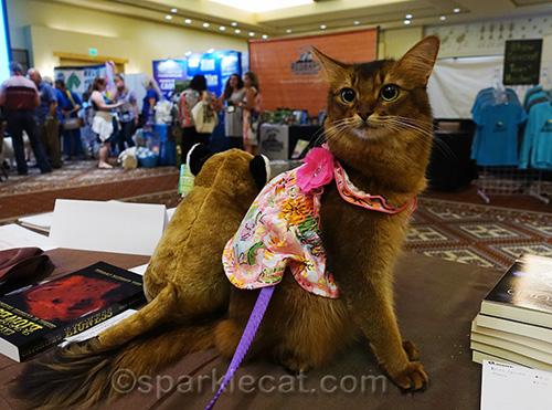 somali cat waiting for her fans at the CWA booth at BlogPaws
