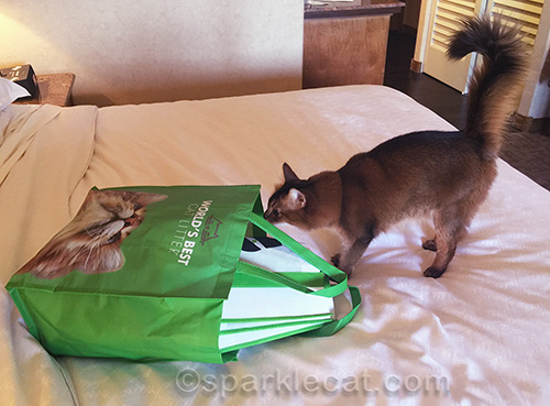 somali cat with Cat Writers Association swag bag