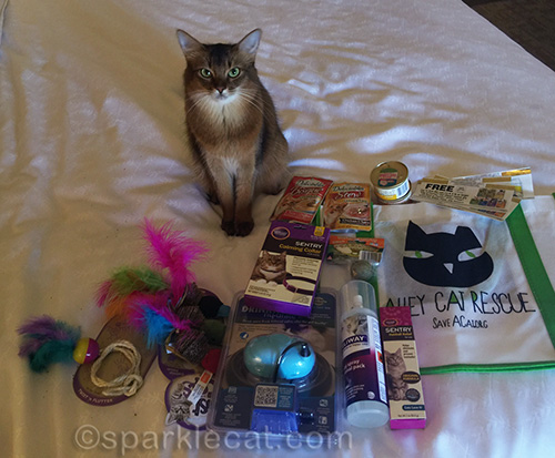 somali cat with CWA goodies to give away