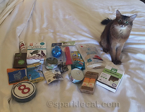 Somali cat posing with BlogPaws cat goodies for giveaway