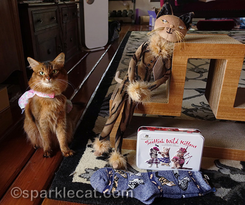 somali cat with human part of Cat World Domination Day prizes