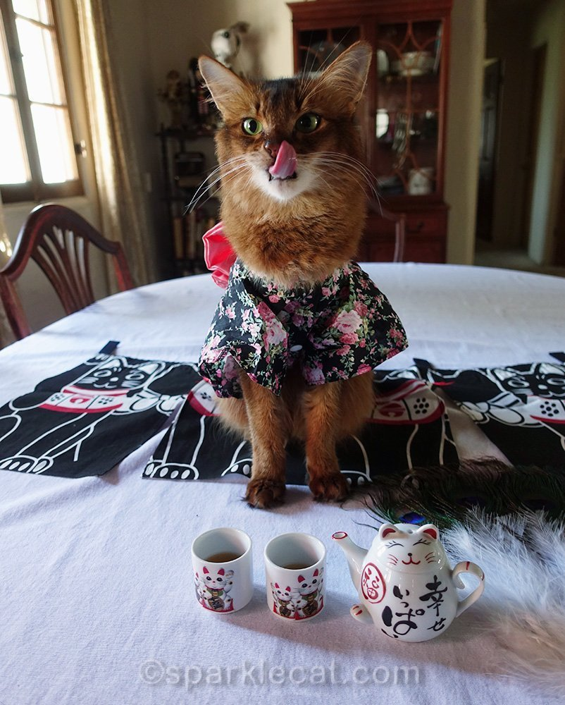 somali cat tongue with catnip tea
