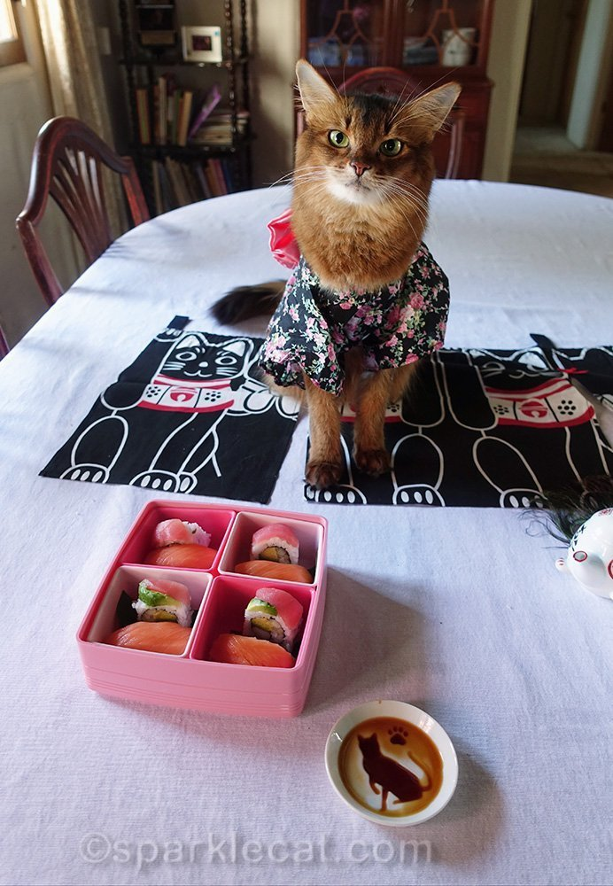 somali cat with bento box of sushi and cat soy sauce dish