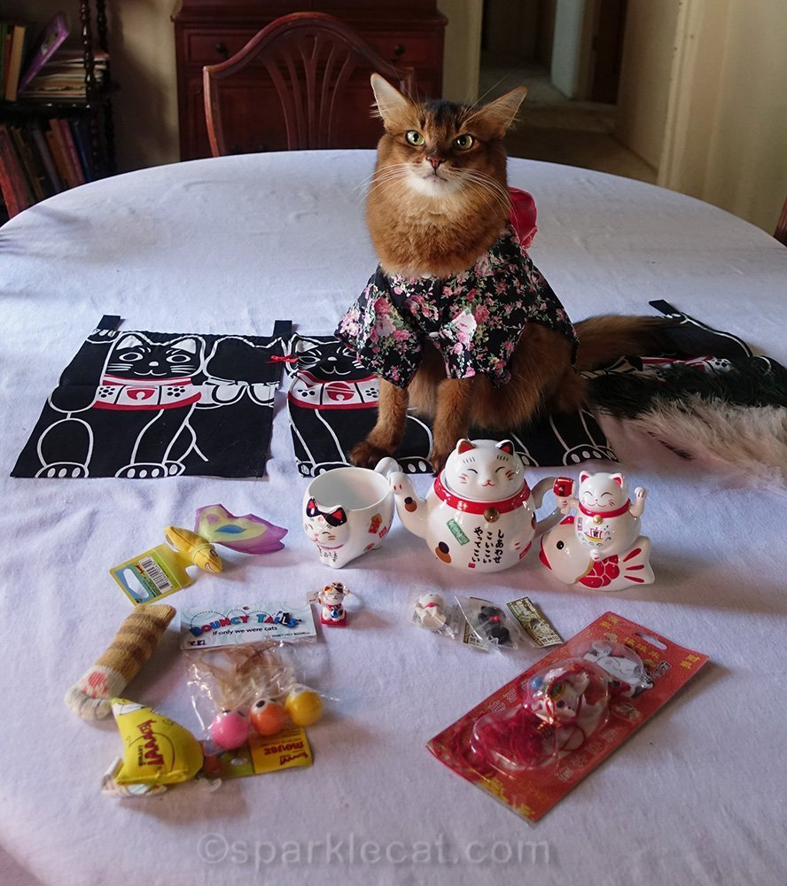 somali cat with cat world domination day prizes
