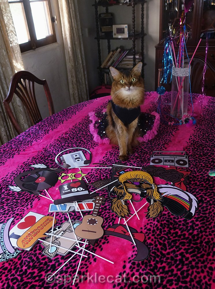 It's Cat World Domination Day and Summer is celebrating it 80s style!