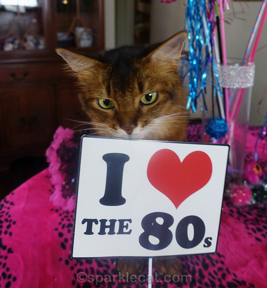 somali cat with I love the 80s photo prop