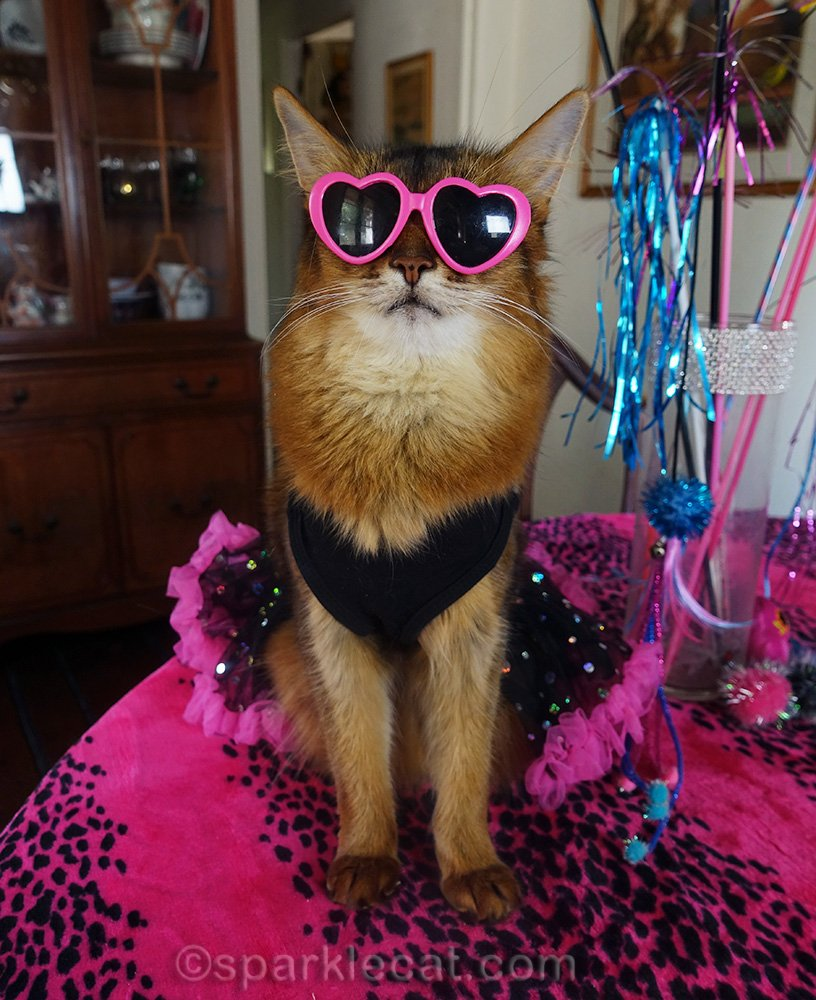 somali cat in 80s dress, wearing heart sunglasses