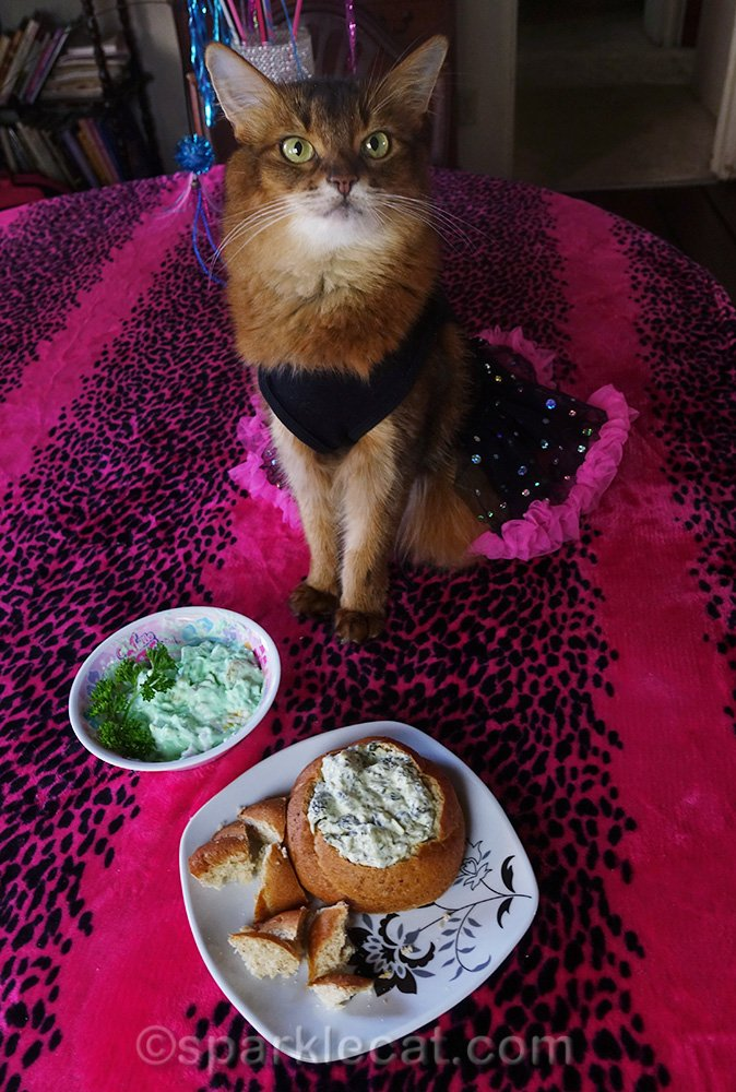 somali cat with catnip fluff and catnip dip in bread bowl