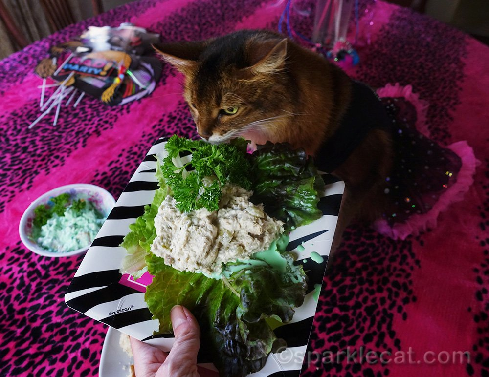 somali cat sniffing tuna salad
