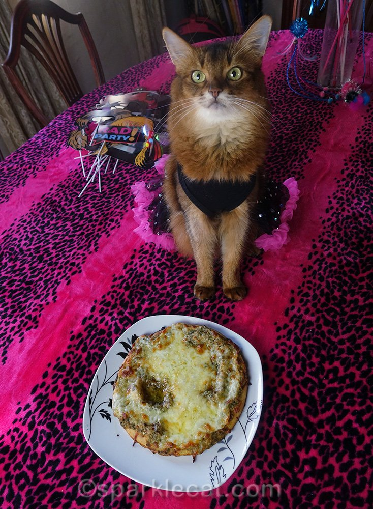 somali cat with catnip pesto pizza