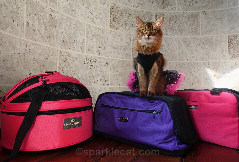 somali cat with collection of Sleepypod carriers