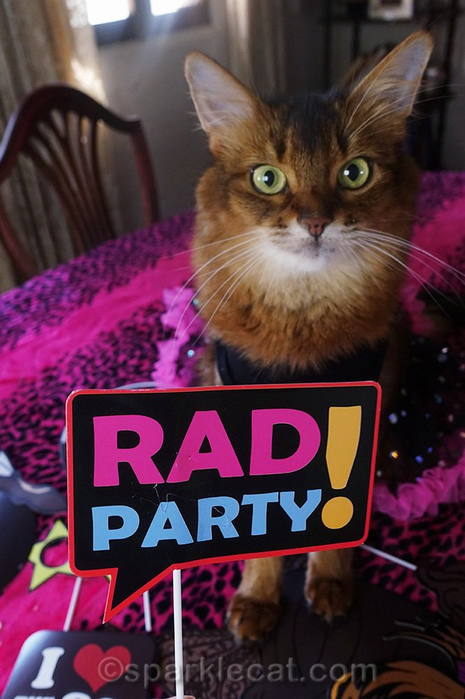 somali cat with Rad Party photo prop