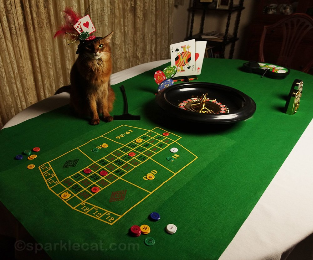 Summer celebrates Cat World Domination Day by turning her dining room into the Lucky Cat Casino.