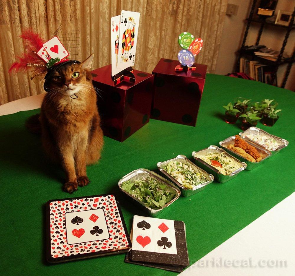 Somali cat with Las Vegas style buffet