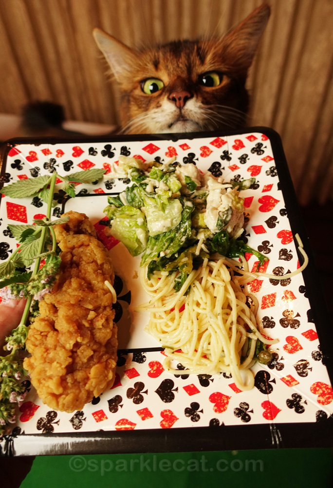 somali cat looking excited about plate of buffet food