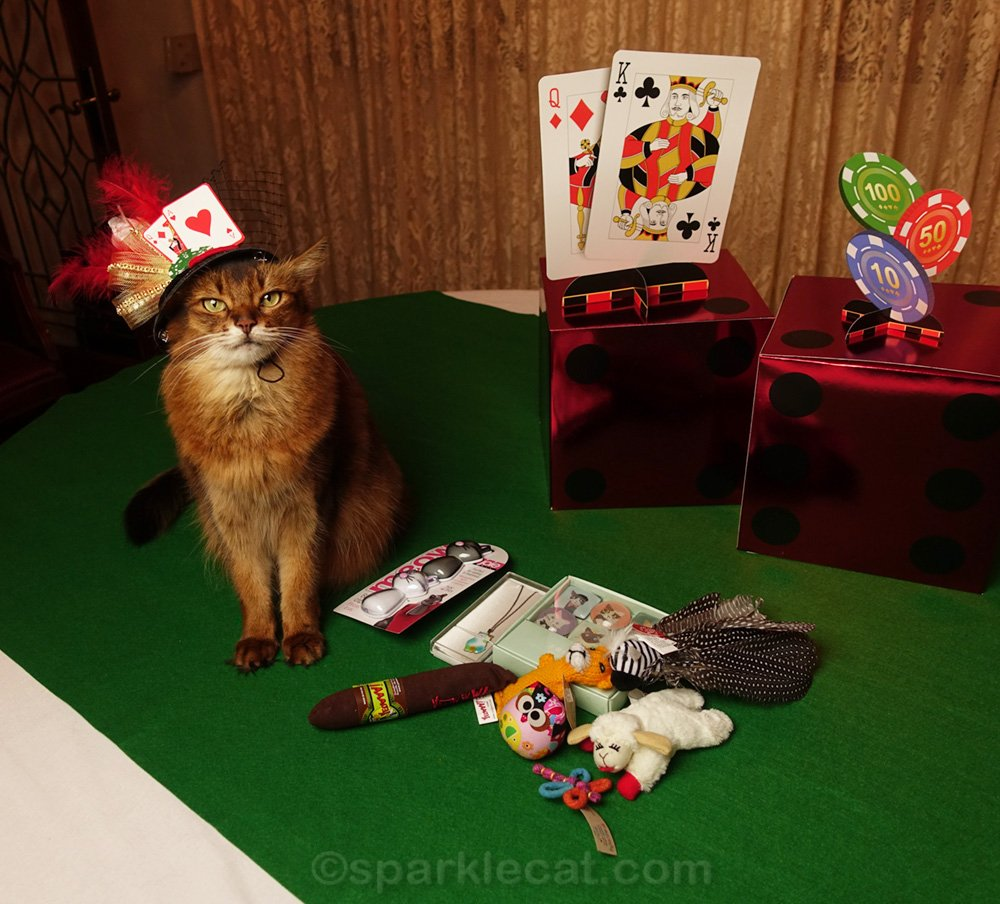 Somali cat with Cat World Domination Day prize package