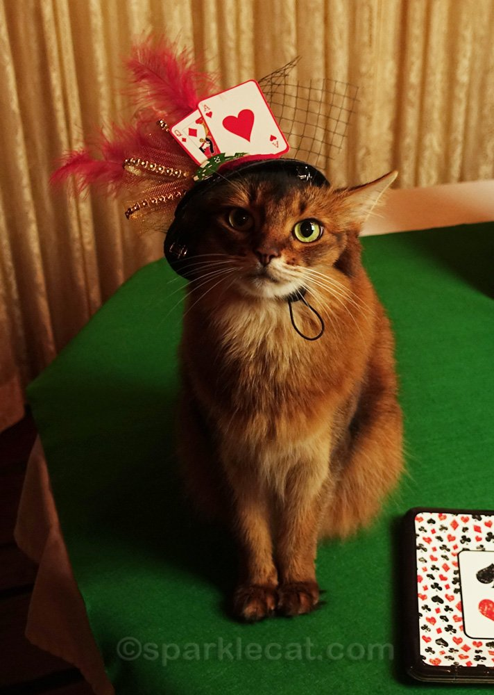 somali cat with gambling party hat on