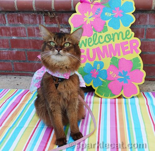 somali cat on Cat World Domination Day