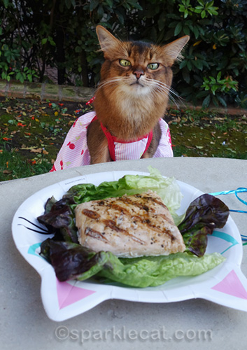 somali cat looking intensely at salmon