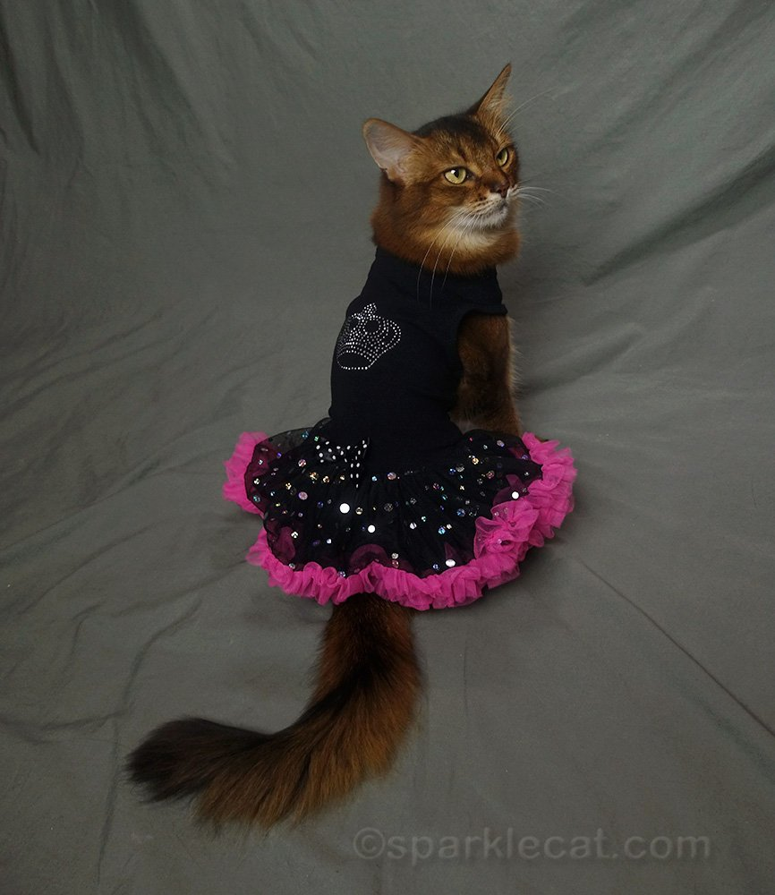 somali cat modeling the back of the 80s dress