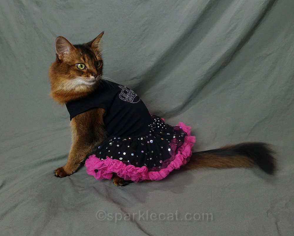 somali cat side view of dress