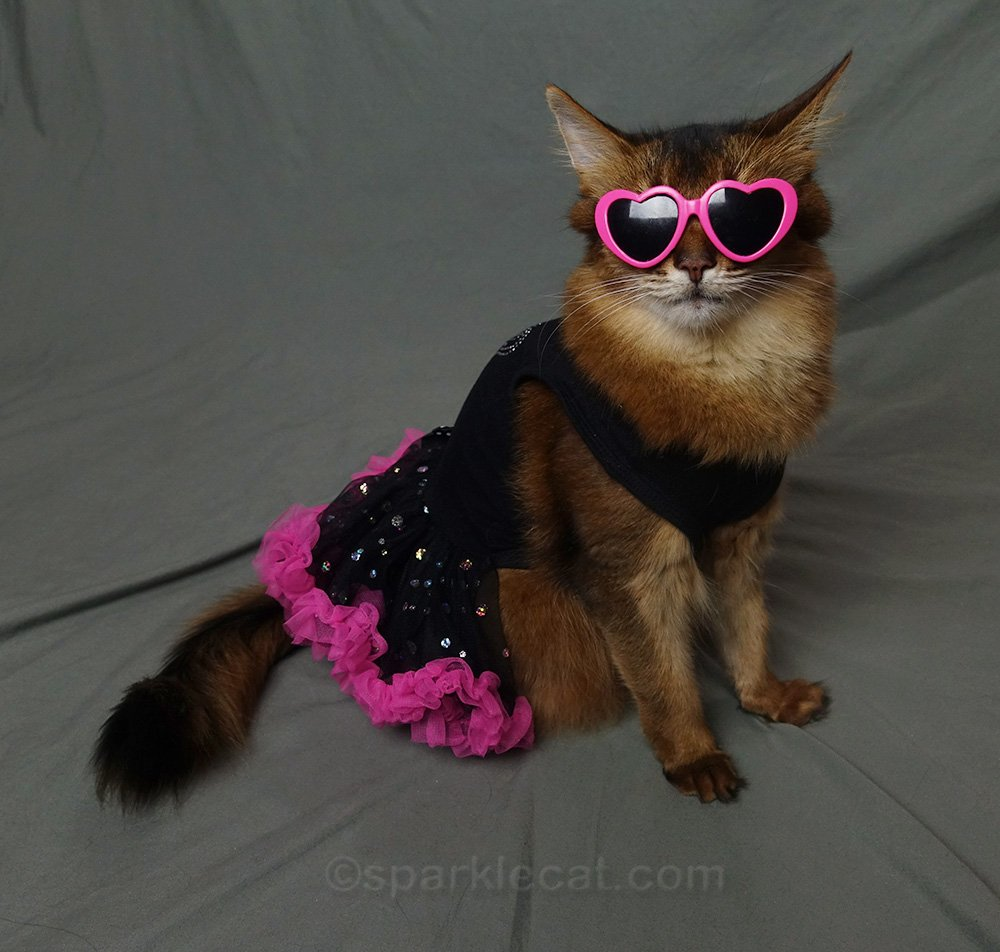 somali cat wearing pink heart sunglasses with 80s dress