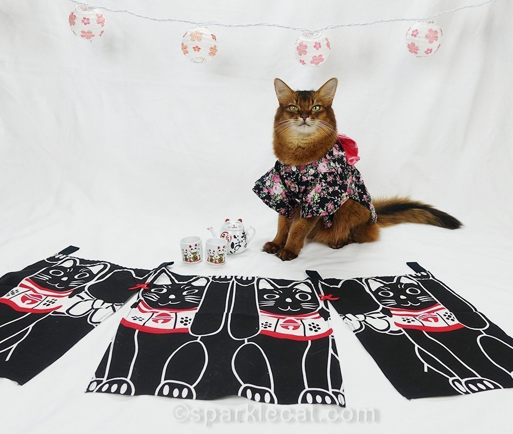 another pose of somali cat in kimono
