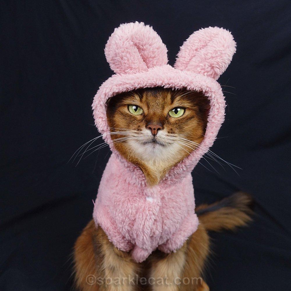 somali cat in bunny costume