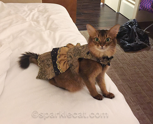somali cat wearing couture dress by Stacy Hurt
