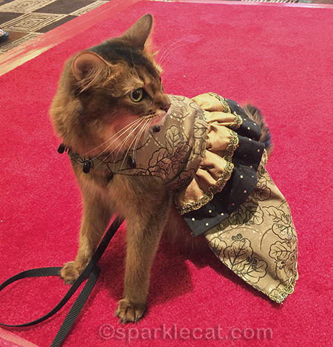 somali cat on the red carpet in couture dress