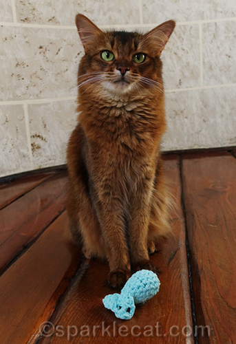 somali cat with crocheted fish toy