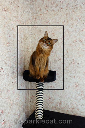 showing how cropping a photo can help when photographing pets