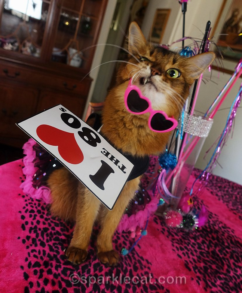 totally ridiculous outtake with somali cat, sunglasses, a dress and a photo prop