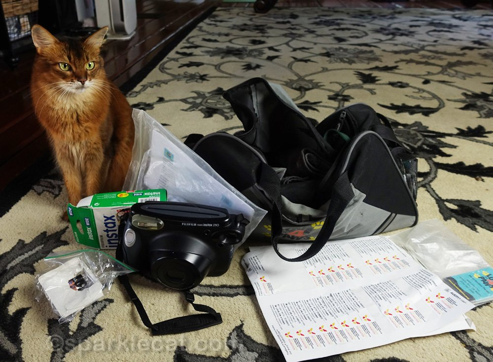 somali cat checking out tote bag items for her therapy cat work