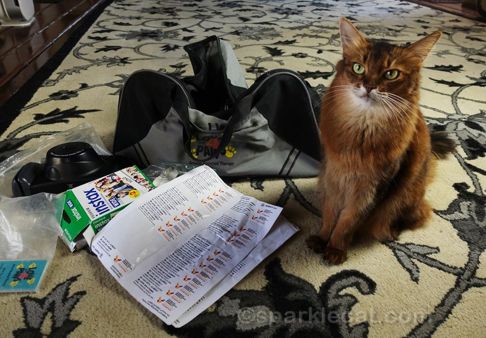 Therapy cat unhappy with condition of photo labels