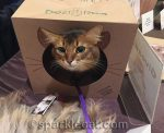 BlogPaws Outtakes and Extras