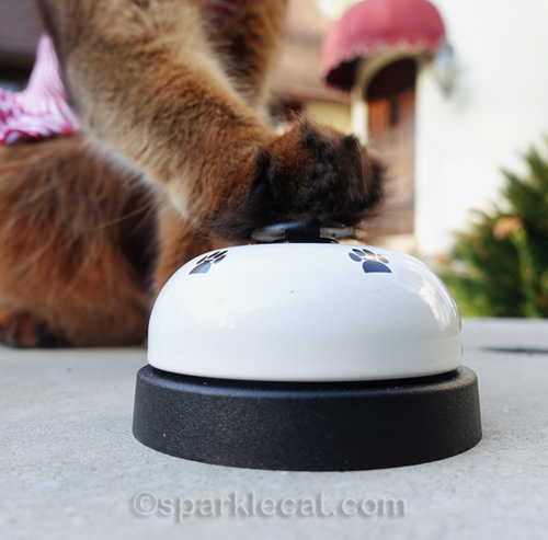 somali cat paw on a desk bell