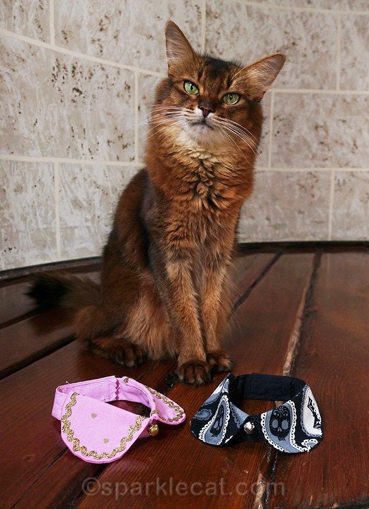 somali cat with two peter pan cat collars