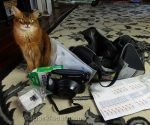 Summer features of video of her checking her tote back to see if she is ready to return to therapy cat work.