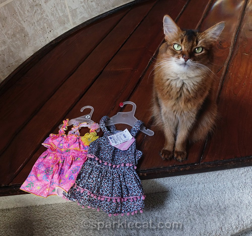 somali cat with two dresses from Ross