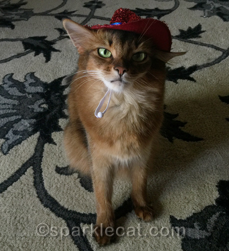 annoyed somali cat in Independence Day hat