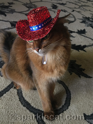 somali cat wearing independence day hat low over eyes