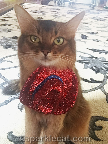 somali cat posing with hat around her neck at an awkward angle
