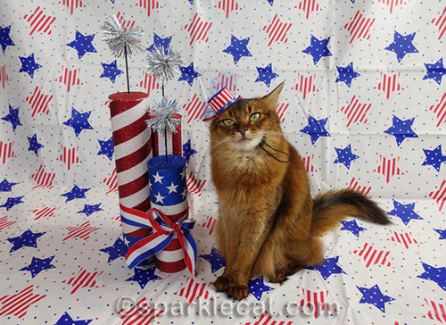 somali cat with uncle sam hat and patriotic set
