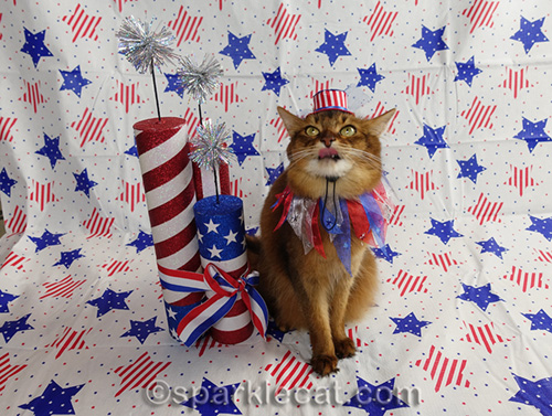 somali cat passing judgement on the backdrop and hat of patriotic photo set