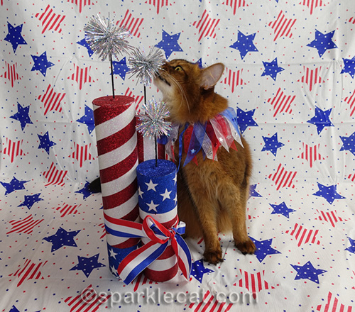 somali cat sniffing fake firecrackers