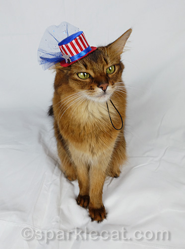 somali cat poses in tiny Fourth of July hat